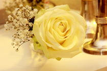white rose von Björn Wortmann