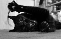 Katze von Vanessa B