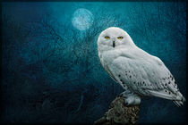 Night Owl by Brian Tarr