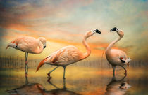 Flamingo Dusk by Brian Tarr