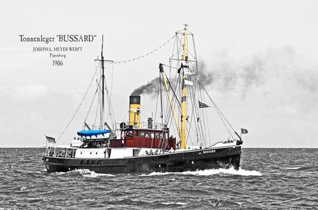 Bussard-2-dsc6762