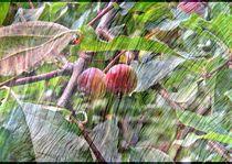 Visions  of Nature  von Rick Todaro