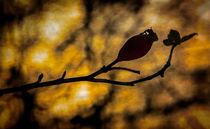 Herbst von Uwe Karmrodt
