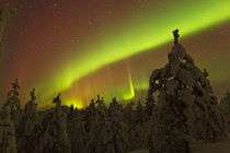 Auroral-arc-over-trees