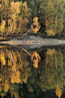 Loch Meig Reflection by Richard Winn