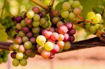 Grapes-dot-jeremy-sage