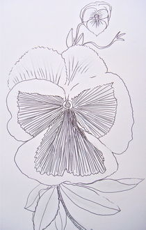 Pansy in Ink by Christine Chase Cooper