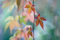 Autumnal Kaleidoscope von Maria Ismanah  Schulze-Vorberg