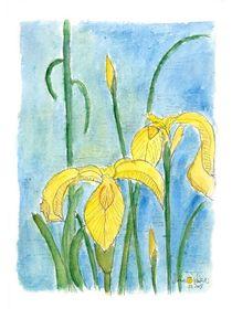 Gelbe Schwertlilie  von Matthias Talmeier