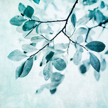 leaves in dusty blue von Priska  Wettstein