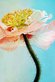 Lady Poppy by AD DESIGN Photo + PhotoArt