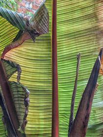 Beneath a Banana Leaf by Roger Butler
