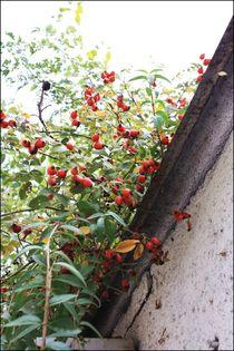 Little red spots by Hristina  Balabanova