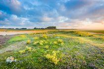 Summer Sunrise by Maciej Markiewicz