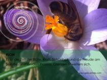 Gaia Prinzip: FLow - Wachstumshöhepunkt von Veronika Lamprecht