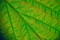 extreme close-up of leaf von Roman Popov