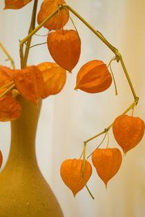 Orange still life with a jug and the dried flowers. von Roman Popov