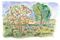 Apfelbaum von Matthias Talmeier