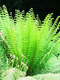 Sunlit-tree-fern