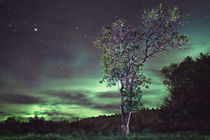 Aurora in the Backyard von Severin Sadjina