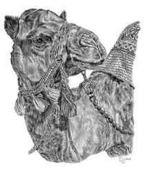 Mr Camel von Denise Wood