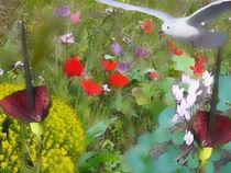 Seagull visit wildflower field von Anat  Umansky