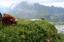 Bären-Yoga in den Alpen von Olga Sander