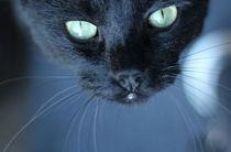 The Black Cat by Freddy Olsson