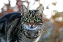cat is starring von Sidney Havlik