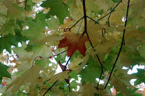 First Leaf of Autumn by John Mitchell