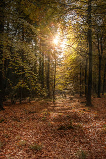 Autumn Sunrise by David Tinsley