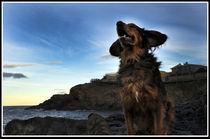 Mr Free in Cap de Creus by Xavi de Juan-Creix