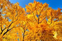 Farbenpracht im Herbst by Daniel Hertrich