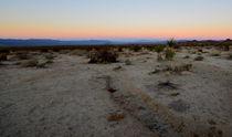 Abendstimmung in der Wüste von Joshua Tree von Martin Pepper