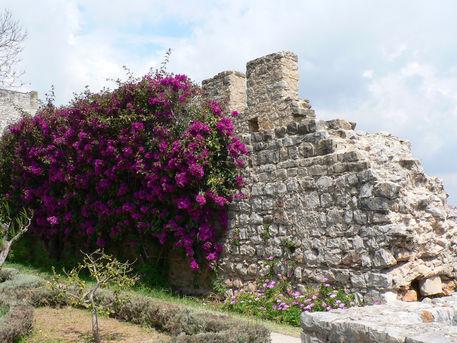 Tavira-castelo-mauer-blumen
