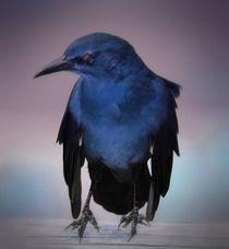 Edgar Allan von O.L.Sanders Photography