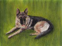 German Shepherd by Anastasiya Malakhova
