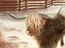 Highland Bull von Anastasiya Malakhova