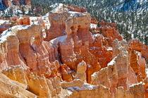 Bryce Canyon 25 Felsgruppe orange vor Fichten im Hintergrund von Martin Pepper