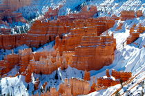 Bryce Canyon 24 Schloss - Fantasie im Schneehang von Martin Pepper