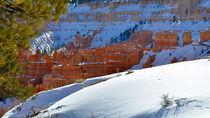 Bryce Canyon 14 16:9 Schneewehe vor rötlichem Gestein mit hellgrünem Baum von Martin Pepper