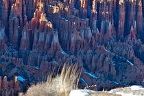 Bryce Canyon 1 Grasbüschel von Martin Pepper