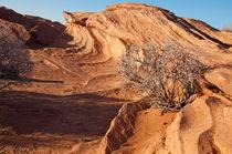 Horseshoe Bend, Page, Arizona  Wüstenmuster beige braun von Martin Pepper
