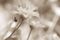 Weben von Bastian  Kienitz
