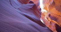 Sandkatze schnuppert am lila Meer von Martin Pepper