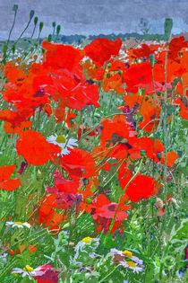 Poppies II von David Pringle