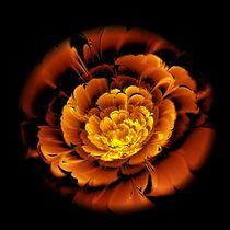 Orange Flower  by Anastasiya Malakhova