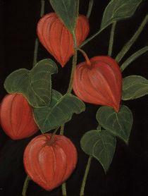 Physalis von Anastasiya Malakhova