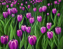 Purple-tulip-field-anastasiya-malakhova
