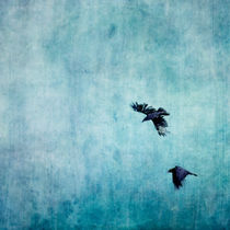 Ravens Flight by Priska  Wettstein